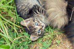 Little kitten lying near mother cat Stock Images