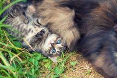 Little kitten lying near mother cat royalty free stock photography