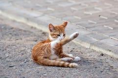 Little kitten lying Royalty Free Stock Image