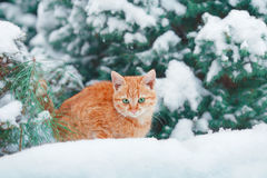 Little kitten lying in the snow Royalty Free Stock Images