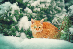 Little kitten lying in the snow Royalty Free Stock Photos