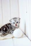 Little kitten meow. On white wooden background Royalty Free Stock Photo