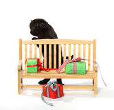 Little kitten near the Christmas bench Royalty Free Stock Images