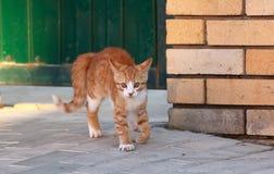 Little kitten near the gate Stock Photo
