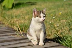 Little kitten outdoor Stock Photo