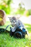 Little kitten, outdoor Stock Photos