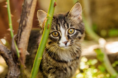 Little kitten outdoors Royalty Free Stock Photos