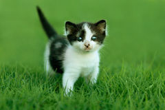 Little Kitten Outdoors in Natural Light Stock Photography