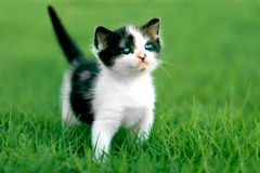 Little Kitten Outdoors in Natural Light Royalty Free Stock Photos