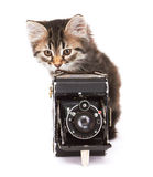 Little Kitten with photocamera Royalty Free Stock Photo