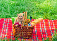 Little kitten on picnic basket Stock Photo