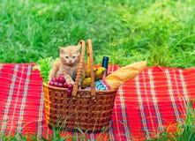 Little kitten on picnic basket Stock Photo