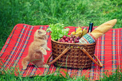 Little kitten at picnic Stock Image