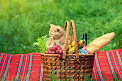 Little kitten at picnic Royalty Free Stock Photos