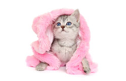 Little Kitten in Pink Fur Coat on a white. Little Kitten in a Pink Fur Coat on a white background Stock Photos