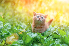 Little kitten in plantain Royalty Free Stock Images