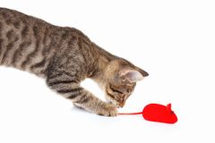 Little kitten is played with a red toy mouse on white background. Little kitten is played with a red toy mouse on a white background Stock Photo