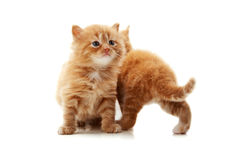 Little kitten playing Royalty Free Stock Photos