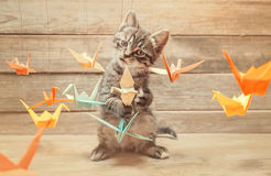 Little kitten playing with colorful origami birds Royalty Free Stock Image