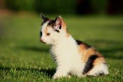 Little kitten playing on the grass Stock Photo