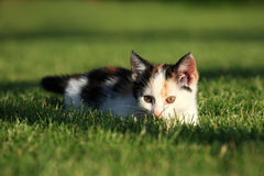 Little kitten playing on the grass Royalty Free Stock Images