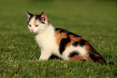 Little kitten playing on the grass Royalty Free Stock Photo