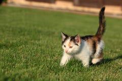 Little kitten playing on the grass Stock Photos