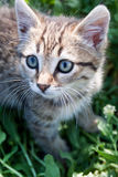 Little kitten playing on the grass Stock Images