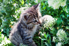 Little kitten playing on the grass Royalty Free Stock Image