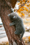 Little kitten playing on the tree Stock Photos