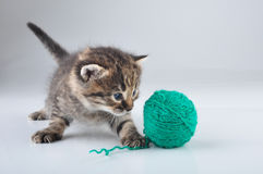 Little kitten playing with a woolball Royalty Free Stock Photography