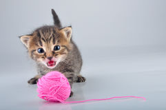 Little kitten playing with a woolball Stock Photography