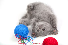 Little kitten playing with woolen clews Stock Photo
