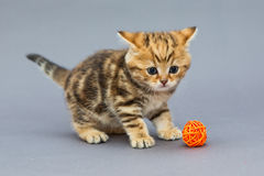 Little kitten  plays with balls Royalty Free Stock Photos
