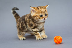 Little kitten  plays with balls Stock Images