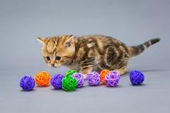 Little kitten  plays with balls Stock Photos