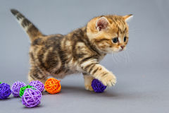 Little kitten  plays with balls Stock Photography