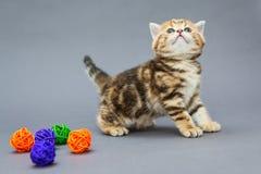 Little kitten  plays with balls Stock Photo