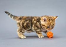 Little kitten  plays with balls Stock Image