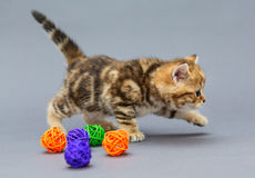 Little kitten  plays with balls Royalty Free Stock Photography