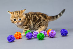 Little kitten  plays with balls Royalty Free Stock Photo