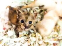 Little kitten plays in the basket. Stock Photography