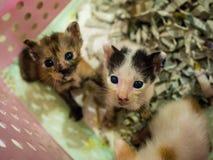 Little kitten plays in the basket. Stock Photos
