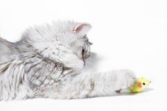 Little kitten plays Royalty Free Stock Photos