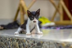 Little kitten on porch with a mustache like Hitler royalty free stock photography