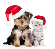 Little kitten and puppy  in red christmas hats sitting together. isolated on white Royalty Free Stock Image