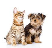 Little kitten and puppy. on white background.  royalty free stock image