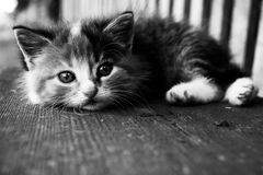 Little kitten Stock Images
