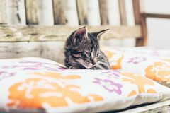 Little kitten resting on comfortable cushions. Little kitten resting on comfortable colorful cushions on a wooden garden bunch lying staring sleepily down at stock photo