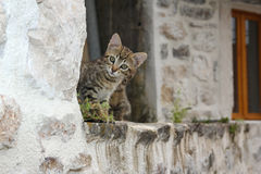 Little kitten on the roof of old building Royalty Free Stock Photography